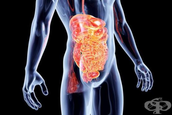 9 признака, че във Вашия организъм има паразити